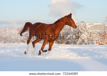 running horse in a winter city background