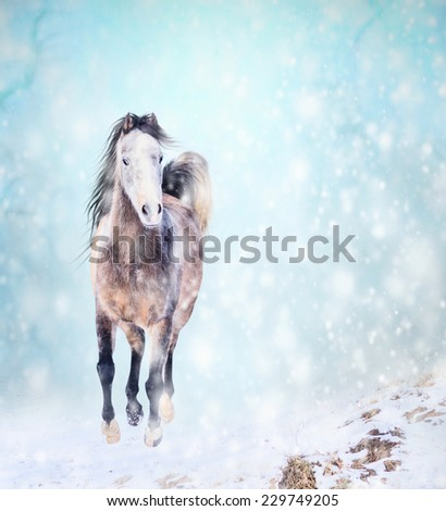 Running horse in snow, winter landscape - stock photo
