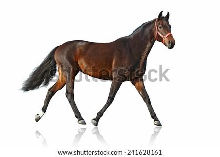 Running horse isolated on white background - stock photo