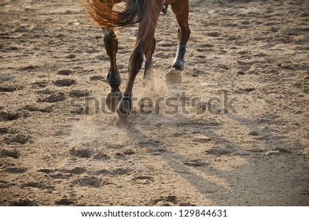 running horse on sand field - stock photo