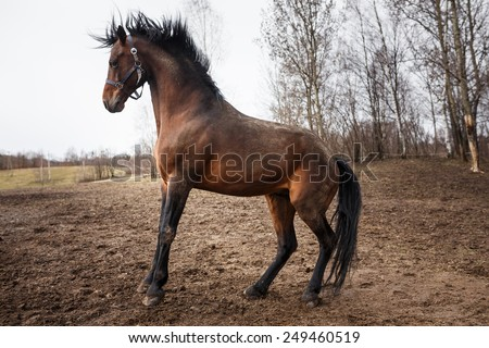 Running horse on the dirty field at spring time - stock photo