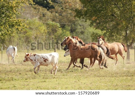 Running horses and Texas Longhorn cattle - stock photo