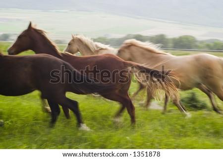 running horses (blurred) - stock photo