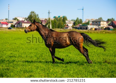 running horses in a meadow