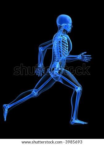 running man - anatomy - stock photo