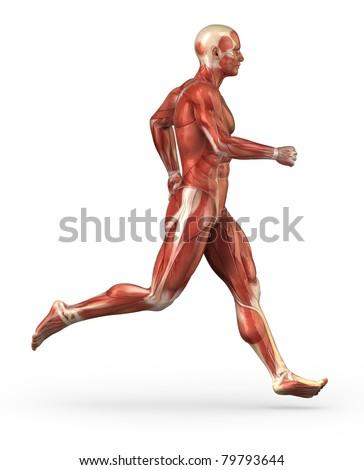 Running man muscular anatomy - stock photo