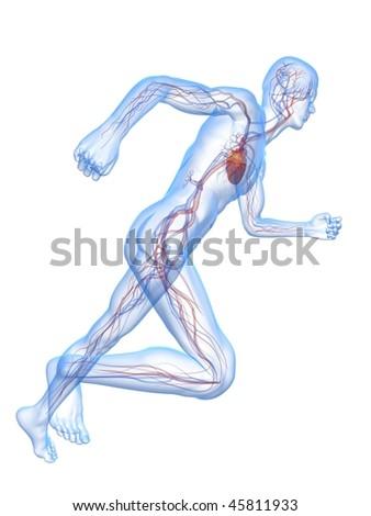 running man - vascular - stock photo