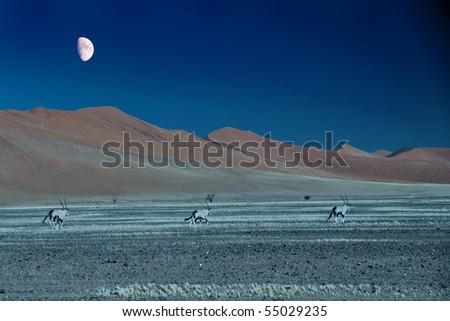 Running under the moon - stock photo