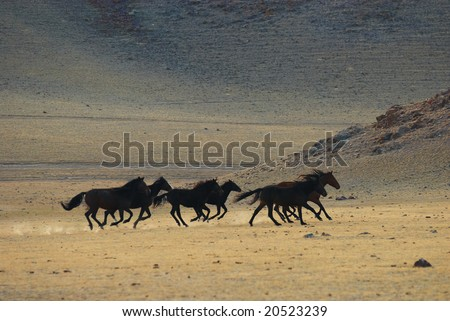Running wild horses in desert mountains - stock photo
