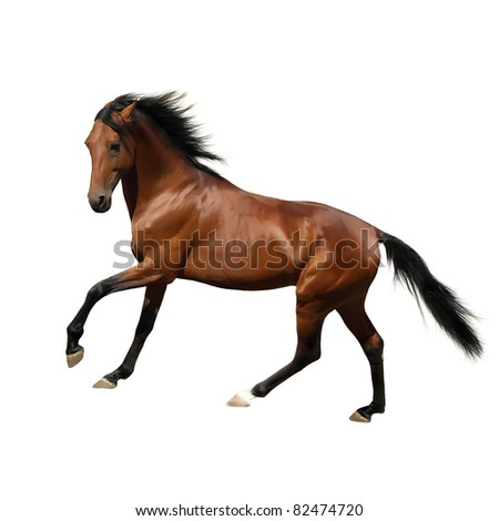 Rur - beautiful Russian trotter, prize winner of the St. Petersburg International Horse Exhibition Hipposphere. Isolated on white. - stock photo