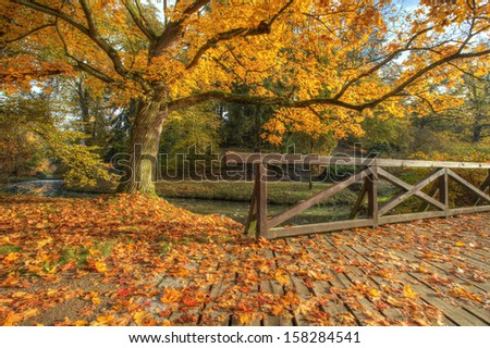 Rural autumn park view in beautiful color mood - stock photo