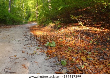 Rural autumn scenery - Fall in forest - park road  - stock photo