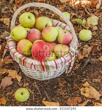 Rural autumn still life with a basket of apples - stock photo