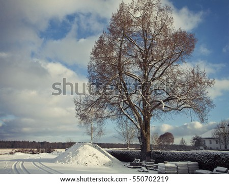 Rural Bavaria, winter landscape with tree and snow. Instagram-like filter added
