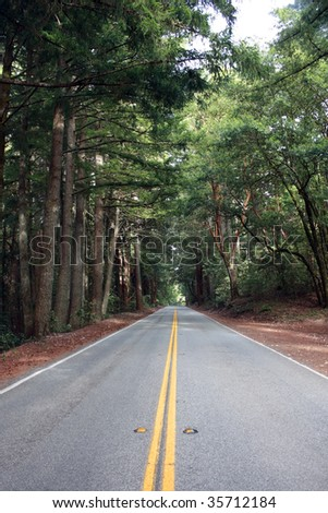 Rural California redwood forest road, landscape, background