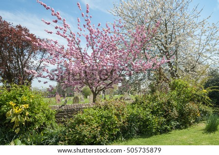 rural churchyard trees in colorful springtime blossom
