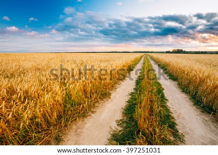 Rural Countryside Road Through Wheat Field. Yellow Barley Field In Summer. Agricultural Season, Harvest Time. - stock photo