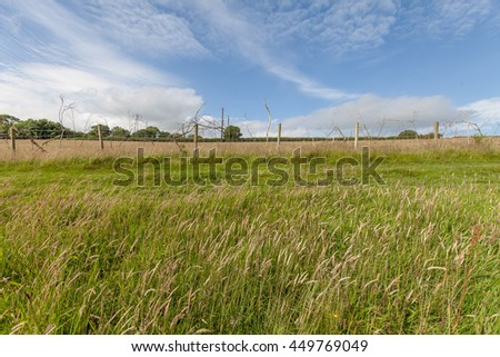 Rural countryside view with blue sky and long grass in Carmarthenshire, Wales, UK