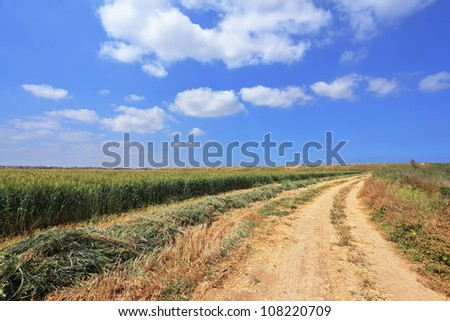 Rural dirt road between the green wheat fields. Gorgeous spring day in Israel