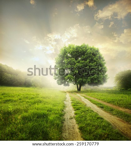 Rural dirt road through the field  - stock photo
