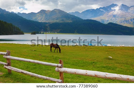 Rural fence along the lake shore. Sleek thoroughbred bay horse grazing near the moored yachts - stock photo