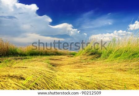 Rural field - stock photo