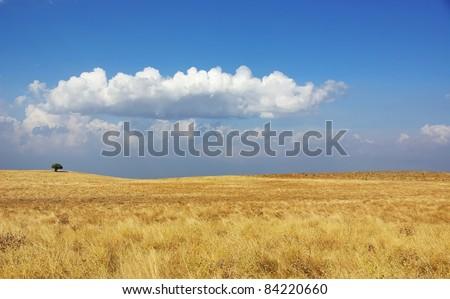 Rural field at Alentejo region, Portugal. - stock photo