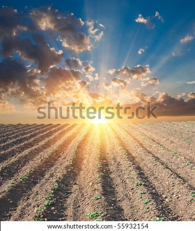 rural field at the sunset - stock photo