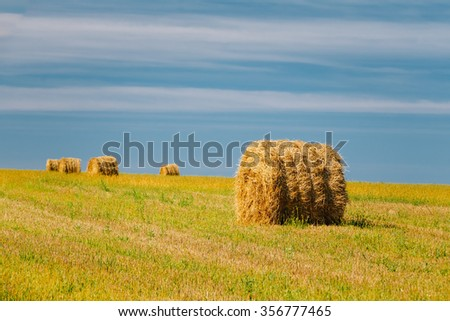 Rural Field Meadow With Hay Bales After Harvest in Sunny Day in Late Summer, Early Autumn.