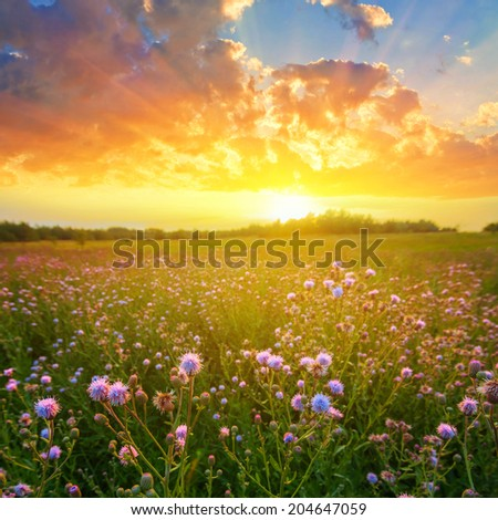 rural field scene at the sunset
