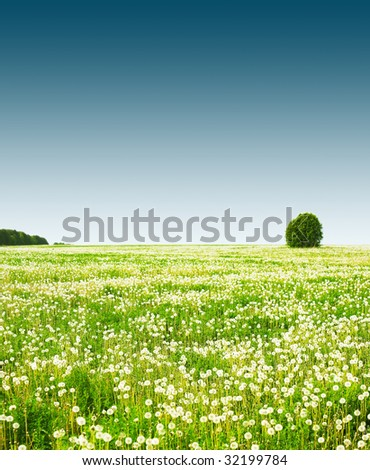 Rural field with flowers and trees under clear sky - stock photo