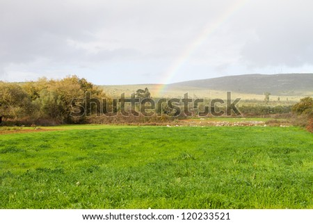Rural garden on bottom of an hill with rainbow - stock photo