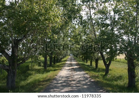 Rural gravel road in shade of trees on a sunny day
