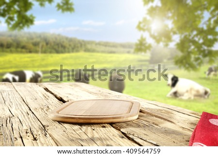 rural green landscape of farm and white and black cows and leaves on trees  - stock photo