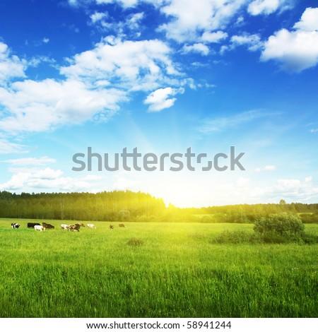 Rural landscape. - stock photo
