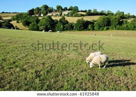 Rural Landscape - stock photo