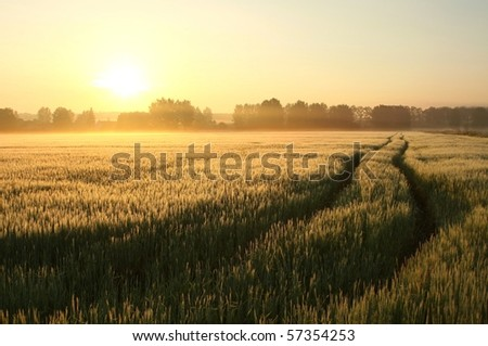 Rural landscape at dawn with the morning mist floating over the field. - stock photo
