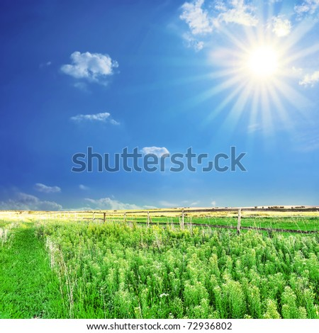 Rural landscape. Bright sun over the green field at summer.