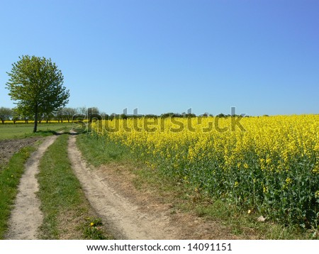 Rural landscape - dirt road and surrounding fields - stock photo