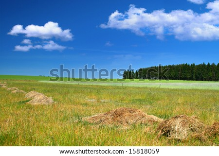 rural landscape, focus set on the tree line - stock photo