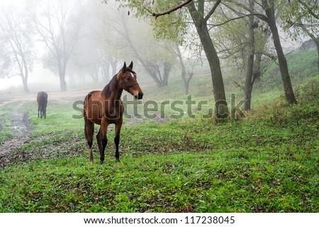 Rural landscape. Grazing Horse - stock photo