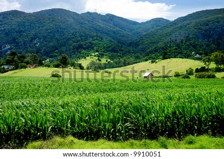 Rural Landscape in NSW - stock photo