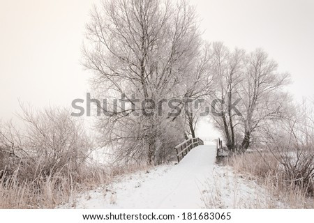 Rural landscape in the Netherlands with bare trees a wooden bridge on a misty and cloudy day in the winter season.
