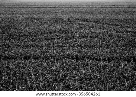 rural landscape in the summer or spring - stock photo