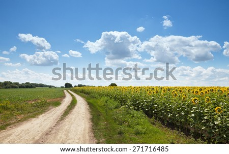 Rural landscape of empty road near sunflower field at summer sunny day  - stock photo