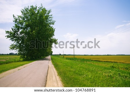 Rural landscape photo of empty road with trees and old telephone poles by the wheat fields - stock photo