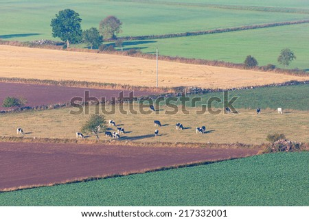 Rural landscape view cows on the field - stock photo