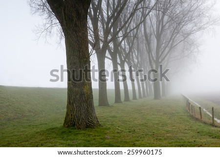 Rural landscape with a dike and a row of tall trees on a foggy day in the end of the winter season. - stock photo