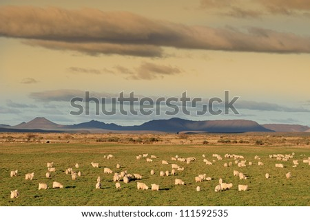 Rural landscape with a flock of Angora goats on lush green pasture - stock photo