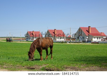 Rural landscape with a horse, Belarus - stock photo
